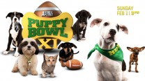ANEMUL_0009_PUPPYBOWLCOVER_ANEMULCOM